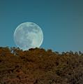Blue Moon Risign by Karen Musick