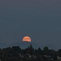 Blue Moon.1 by E Faithe Lester