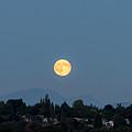 Blue Moon.3 by E Faithe Lester
