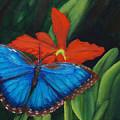 Blue Morph  by Darlene Green