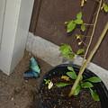 Blue Morpho Butterfly by Joe Smiga