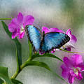 Blue Morpho With Orchids by Bonnie Follett