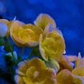 Yellow On Blue by James Shinn
