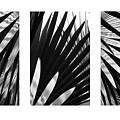 Blue Palma Triptych by John  Bartosik