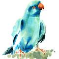 Blue Parrot Bird by Pornthep Piriyasoranant