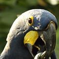 Blue Parrot by Erick Schmidt