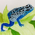 Blue Poison Dart Frog  by Natalia Wallwork