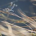 Blue Pond by Carol Groenen