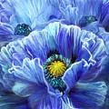 Blue Poppy Splash by Carol Cavalaris