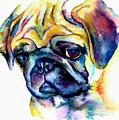 Blue Pug by Christy  Freeman