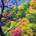 Blue Ridge Autumn by Doug Sturgess
