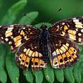 Blue Ridge Butterfly by Kay Lovingood