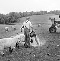 Blue Ridge Mountain Farmer by Buddy Mays