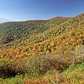Blue Ridge Mountains In Autumn by Doug Berry