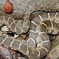 Montreat Water Snake by Joshua Bales