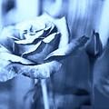 Blue Rose by Debra Lynch