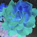 Blue Rose by Linda Dunn