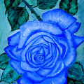 Blue Rose by Quwatha Valentine