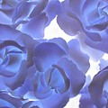 Blue Roses by Tom Reynen