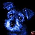 Blue Salt And Pepper Schnauzer Puppy 7206 F by James Ahn