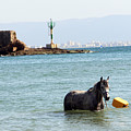 Blue Sea by Munir Alawi