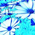 Blue Season by Ingrid Dance