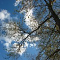 Blue Skies by Amanda Kessel