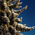 Blue Skies And Fresh Fallen Powder by James BO Insogna