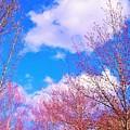 Blue Skies by Rosemary Meier