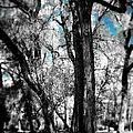 Blue Skies by Sarah Jane Thompson