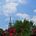 Blue Sky And Roses by Nancy Patterson