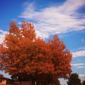 Blue Sky Autumn by Toni Hopper