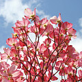 Blue Sky Clouds Landscape 7 Pink Dogwood Tree Baslee Troutman by Baslee Troutman