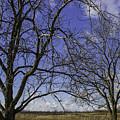 Blue Sky December by Doug Daniels