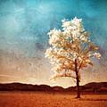 Blue Sky Dreams by Tara Turner