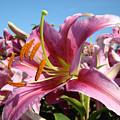 Blue Sky Floral Landscape Pink Lilies Art Prints Canvas Baslee Troutman by Baslee Troutman