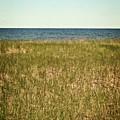 Blue Sky Green Grass by Michelle Calkins