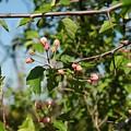 Blue Sky Pink Blossoms by LeeAnn McLaneGoetz McLaneGoetzStudioLLCcom
