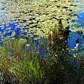 Blue Sky Pond by Dave Martsolf