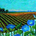 Blue Sky Smiling by Peggy Davis