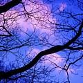 Blue Sky Through The Trees by Eric  Schiabor
