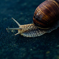 Blue Snail by Pati Photography