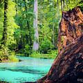 Blue Springs by Llilys Benavides