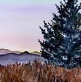 Blue Spruce by Brenda Owen