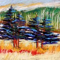 Blue Spruce Stand by John Williams