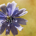 Blue Star #2 by Ignacio Leal Orozco