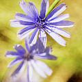 Blue Star #4 by Ignacio Leal Orozco
