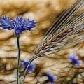 Blue Stars by Joachim G Pinkawa