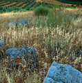 blue stones amongst the olive groves near Iznajar Andalucia Spain by Mal Bray