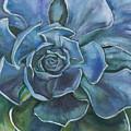 Blue Succulent by Tara D Kemp